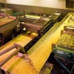 Интересует линия по промышленному производству картофели фри
